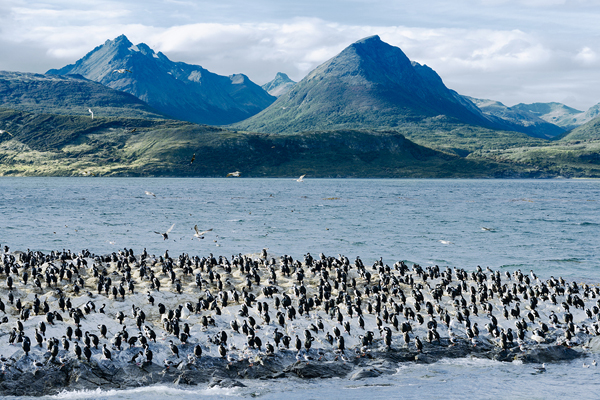 Beagle Channel image
